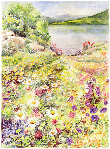 Flower Meadow Fjord